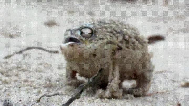 Enlace a Existen especies de rana muy extrañas en el mundo