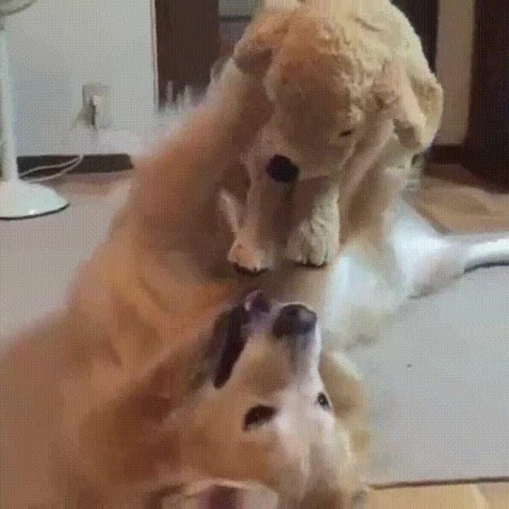 Enlace a Perro jugando con su juguete como lo haría cualquier niño pequeño