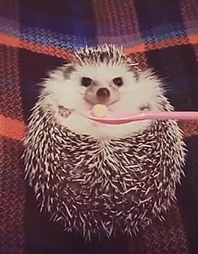 Enlace a Erizo que se convierte en la criatura más feliz cuando le enseñas una manzana