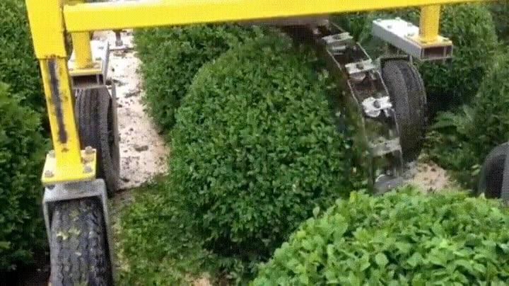 Enlace a Y así es cómo se crea el arbusto perfecto