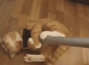 Enlace a Gatos que insisten en ayudarte a limpiar la casa