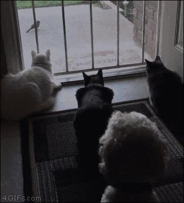 Enlace a Perro trolleando a una panda de gatos despistados
