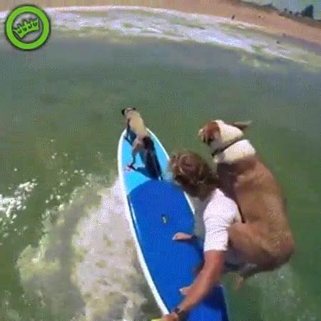 Enlace a Surfeando en compañía de tus dos mejores amigos