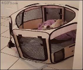 Enlace a Gato ayudando a un perro a escapar de su prisión de máxima seguridad
