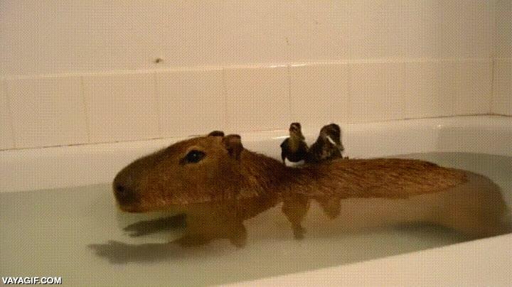 Enlace a Bienvenidos a Isla Capybara