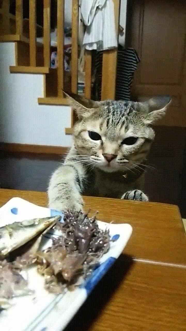 Enlace a Gato que quiere comida humana...bueno puede que no
