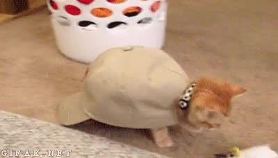 Enlace a Una mezcla de gato y tortuga con mucho swag