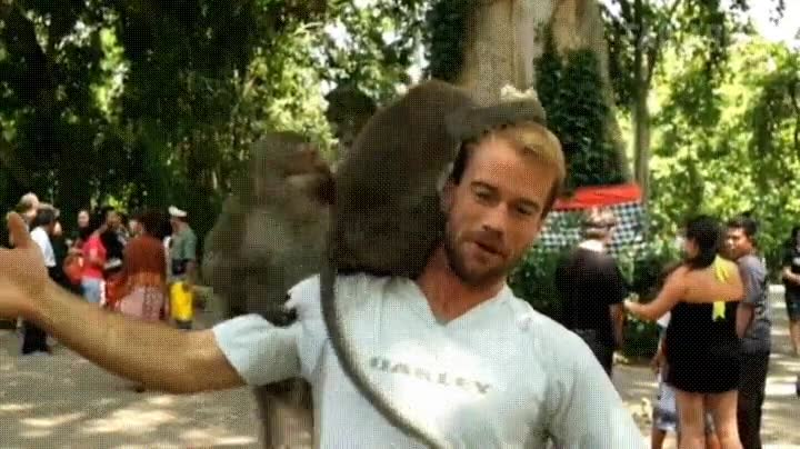 Enlace a Monos que confunden la cabeza de una persona con la cama de un hotel