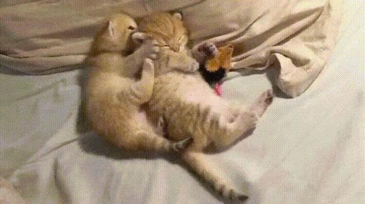 Enlace a Cuando quieres dormir y tu pareja tiene ganas de marcha