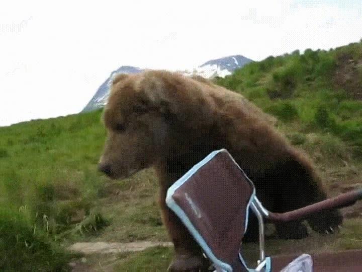Enlace a Venga, nos vemos mañana a la misma hora. Un oso de lo más majo