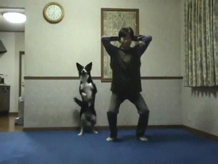 Enlace a Perros comprometidos que hacen gimnasia con sus dueños