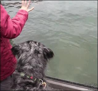 Enlace a Fijaos en los reflejos ninja del perro