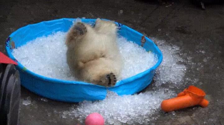 Enlace a No hay nada mejor que vera un oso polar darse un baño de hielo