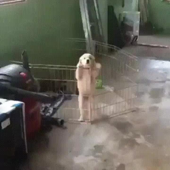 Enlace a Perros que han visto demasiados cpaítulos de Prison break
