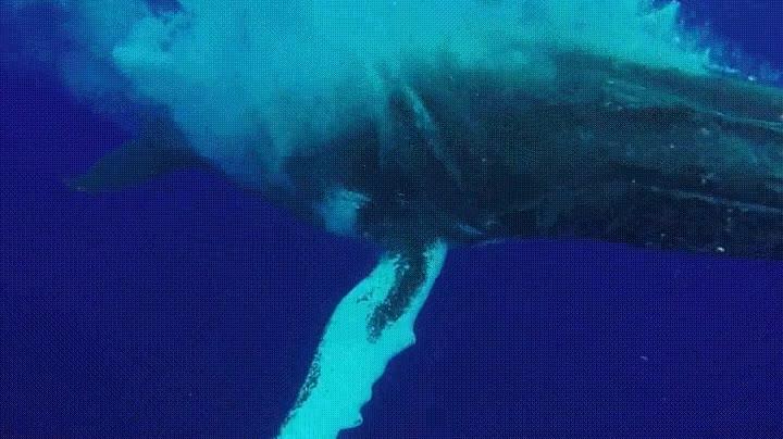 Enlace a Una de las maravillas más alucinantes que puedes ver en alta mar