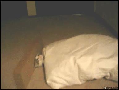 Enlace a Truco infalible para cuando quieres que tu gato se vaya a dormir