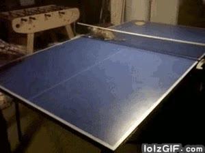 Enlace a Todavía no lo sabes pero tu gato es capaz de jugar a Ping Pong como un campeón