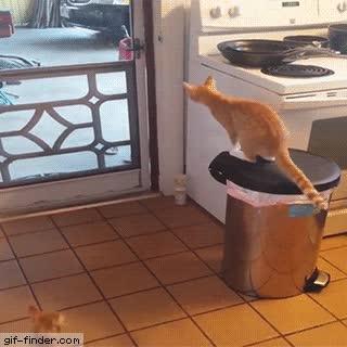Enlace a Gato caballeroso abriendo la puerta a una dama
