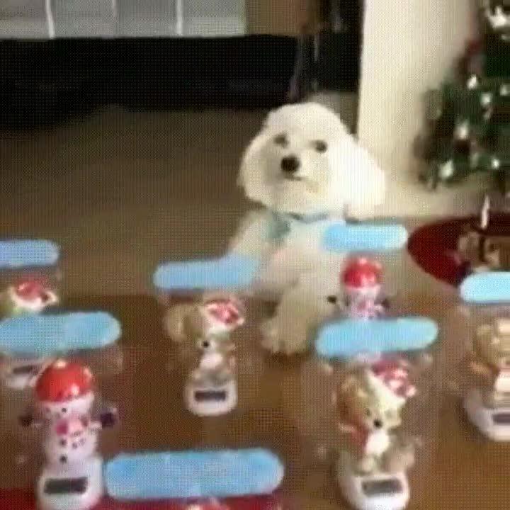 Enlace a Perro con tanto swag que no pueden evitar marcarse un baile