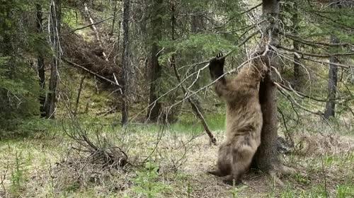 Enlace a Osos que se han montado un club de strip tease en mitad del bosque