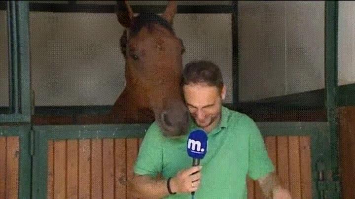 Enlace a Cuando estás en directo y el caballo decide trollearte de buena manera