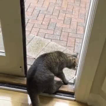 Enlace a Gato que decide volver a casa corriendo al ver que llueve