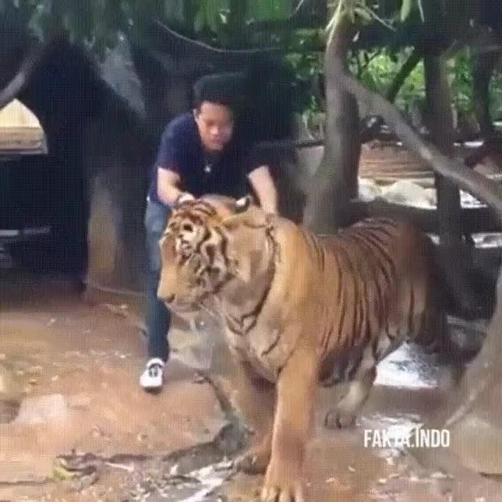 Enlace a Gatos grandes que adoran la hora de la ducha