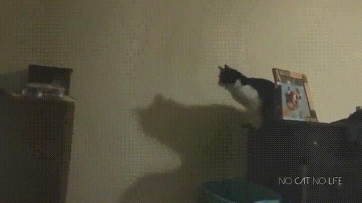 Enlace a Te esperas un mal salto pero lo de este gato es demasiado