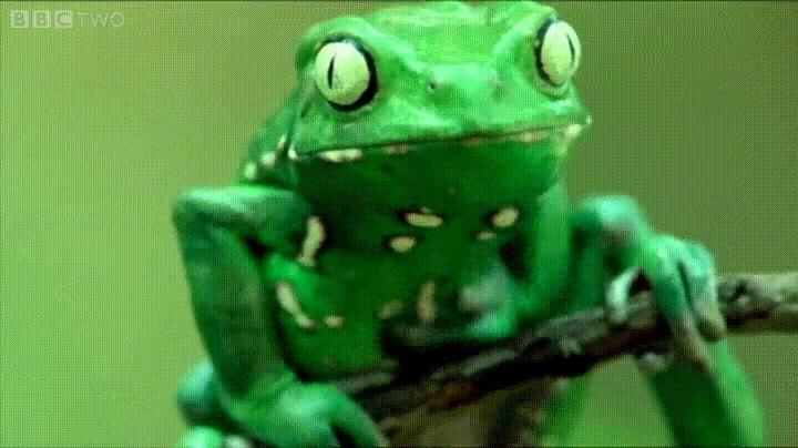 Enlace a ¿Alguna vez habías visto a una rana ponerse crema a si misma?
