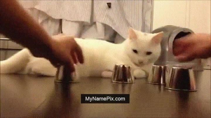 Enlace a Gato más inteligente que muchas personas