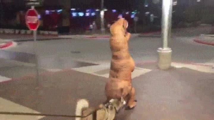 Enlace a Dinosaurio sacando a pasear a su mascota