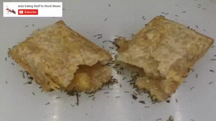 Enlace a Hormigas comiéndose un pastel de manzana a la velocidad de la luz