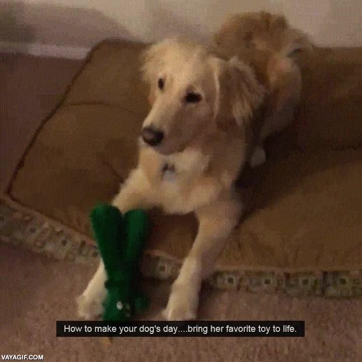 Enlace a ¿Cómo hacer feliz a tu perro?. Disfrázate de su peluche favorito