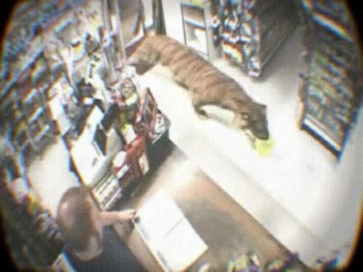 Enlace a Cuando entra un tigre super educado en tu tienda