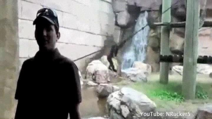 Enlace a Gibón entrenado por ninjas para ser una máquina de matar