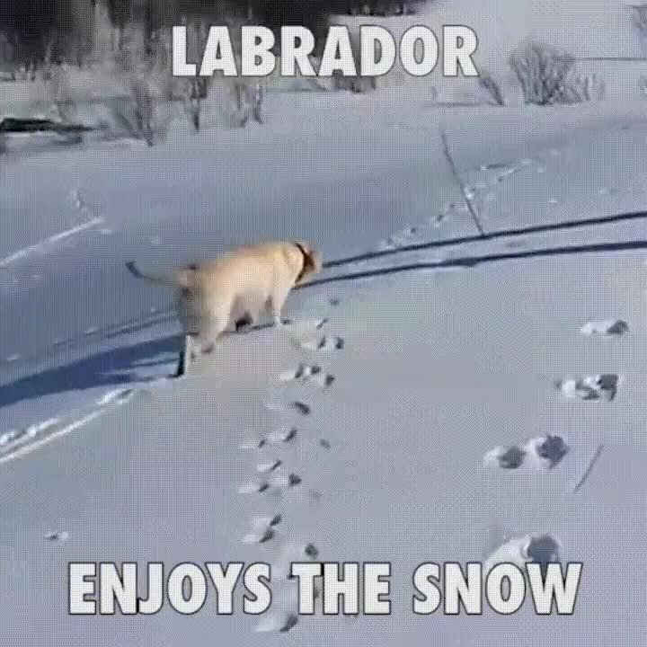 Enlace a Perro disfrutando de su primer día de nieve