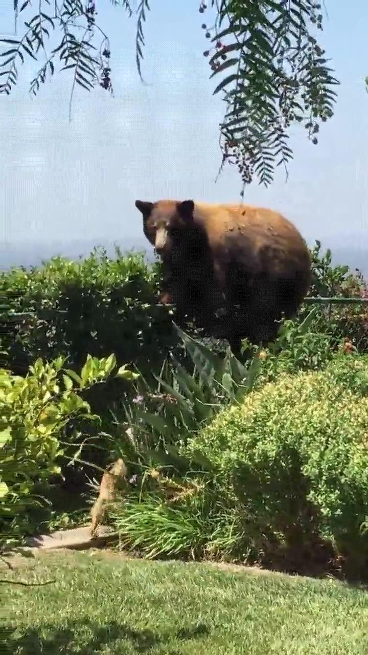 Enlace a Cuando tienes dos perros capaz de asustar a un oso puedes sentirte orgulloso