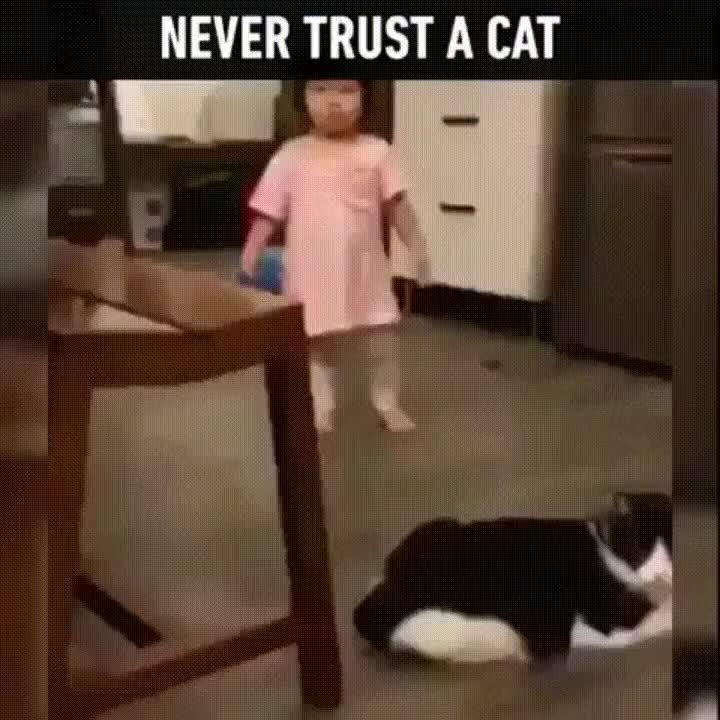 Enlace a Nunca confíes en un gato. Siempre conspiran para matarte