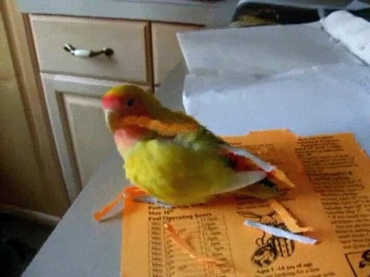 Enlace a Pájaro enganchándose varios trozos de papel para construir su nido y aprovechar el viaje