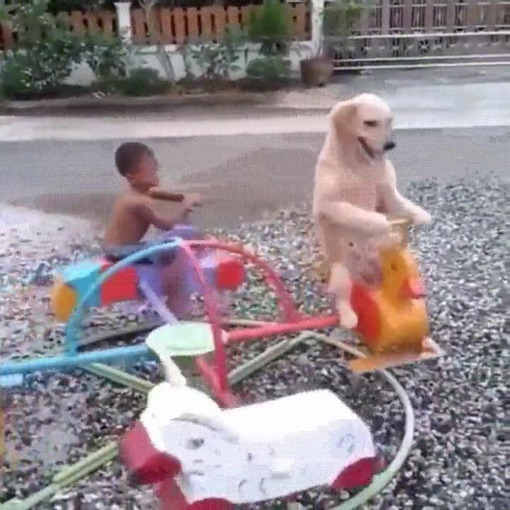 Enlace a Probablemente el perro con más estilo que has visto nunca