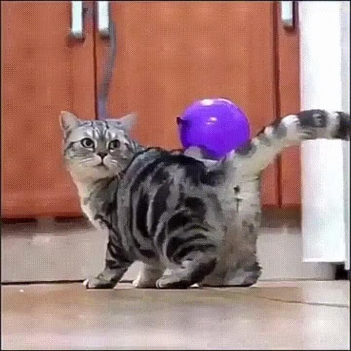 Enlace a Cuando utilizas a tus gatos para hacer experimentos de física