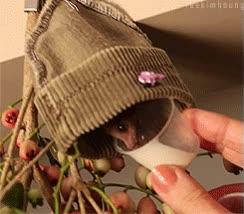 Enlace a Dando de comer a un murciélago minúsculo