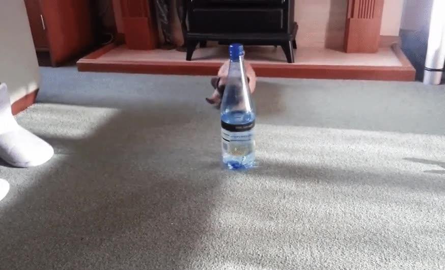 Enlace a Cachorro VS Botella de agua. La batalla más épica de todas