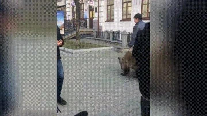 Enlace a En Rusia es normal ver a gente paseando con su oso de compañía