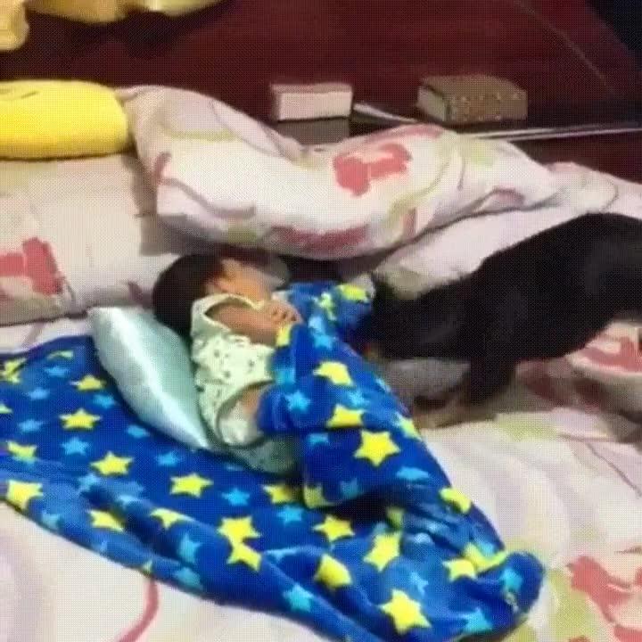 Enlace a Perro preocupándose de que el pequeño de la casa no pase frío