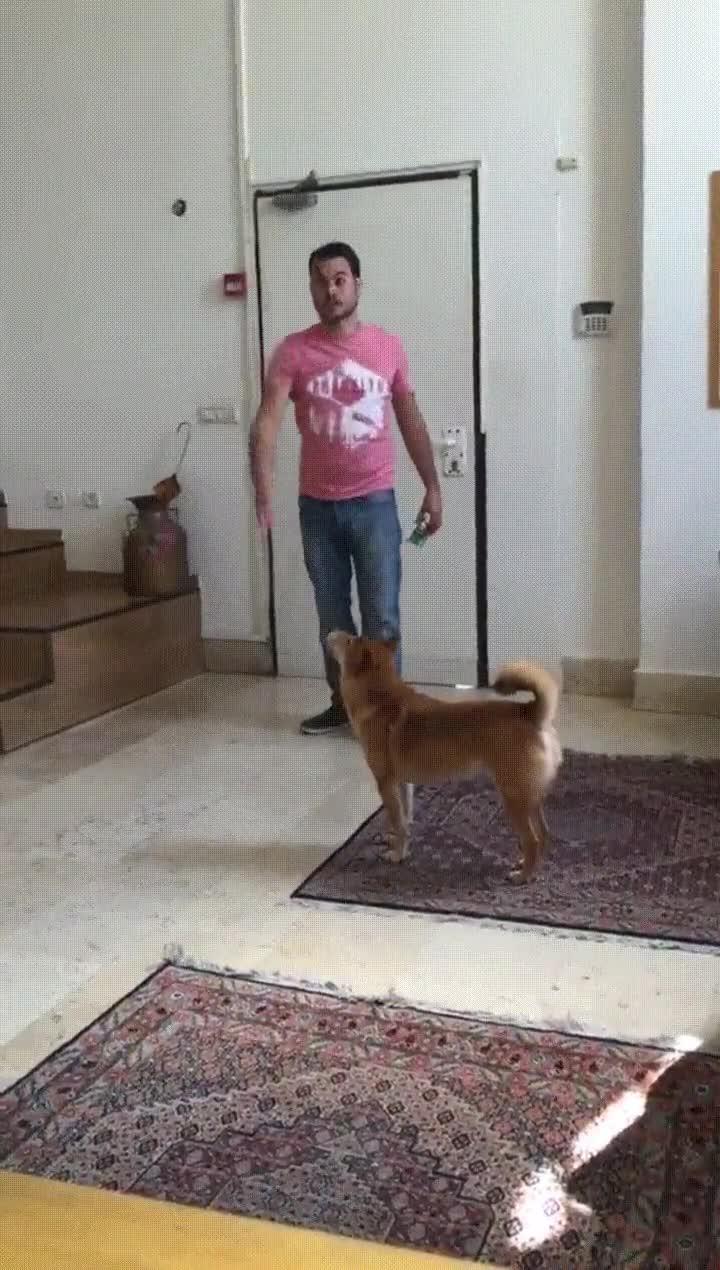 Enlace a El perro más pasota del mundo