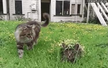 Enlace a Gato perfectamente camuflado con el entorno