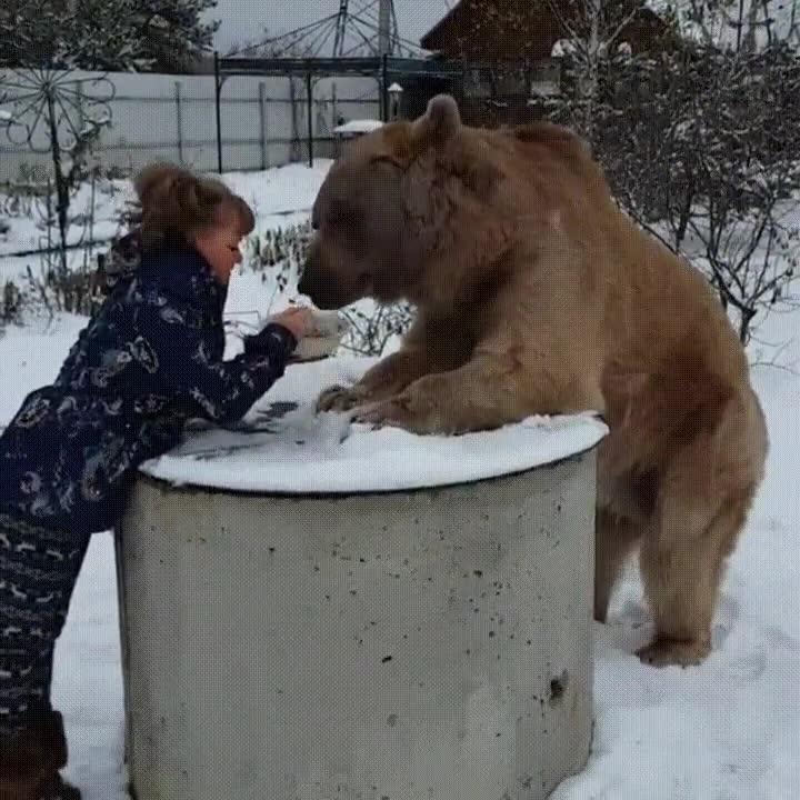 Enlace a Compartiendo una velada romántica con tu oso de compañía