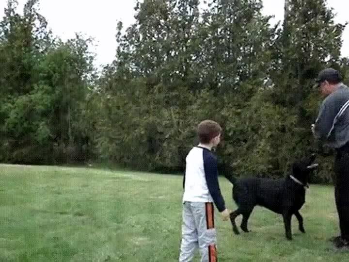Enlace a Perros que han nacido para jugar a fútbol americano