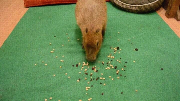 Enlace a Capybara activando el modo aspirador